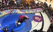 河北石家庄:商场里的大象