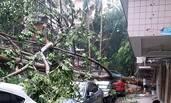 """台风""""玛莉亚""""来袭 福州狂风暴雨"""