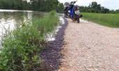 泰国河岸边蚯蚓连绵