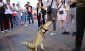 一摊主街头遛鳄鱼 现场制作鳄鱼肉串