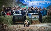 全球首例 众人目送两大熊猫放归自然