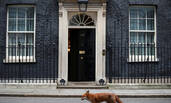 狐狸从英国首相家门前经过画面