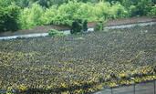 这些是从杭州主城区减量撤出的小黄车