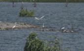 安徽:煤矿塌陷区变身湿地