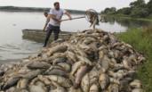 几十吨死鱼浮在水面