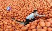山东寿光蔬菜供应平稳 价格略涨
