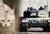 军武次位面:德国为啥爱用动物命名武器