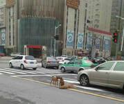 素食护生:黄狗病倒躺路中间 两同伴守护不离不弃(1/7) - 莱芜 德广 - 莱芜 德广