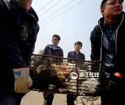 杭州动保志愿者持棍对峙猫贩 彻夜蹲守解救数百流浪猫(4/17) - 莱芜 德广 - 莱芜 德广