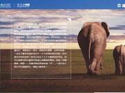 拯救大象罗拉