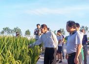 """用海水稻""""治愈""""盐碱地 世界粮食日致敬袁隆平"""