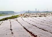 长江岸线池州段生态修复和绿化提升初见成效
