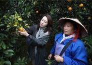 拍摄花絮:现学现卖 李明子和果农学摘红江橙