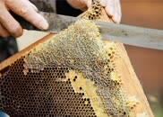 拍摄花絮:苦干不苦熬的天等蜂农