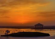 芦花飘雪:秋天,在黄河入海口