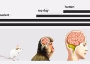 """他曾制造出""""自闭猴"""",现在又有新进展:自闭症即将可以通过基因被诊断了?!"""