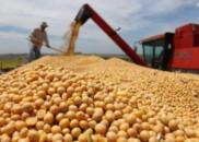 美大豆协会等行业发声明:加征关税是对美消费者征税