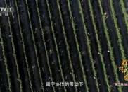 跨区结对帮扶 闽商投资宁夏葡萄园让干沙滩变金沙滩