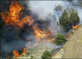 加州三个县进入紧急状态