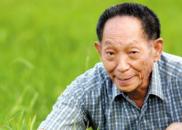 """青岛国际院士港产业成果落地 """"海水稻""""亩产翻倍"""