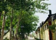 汶上古城种植黄金田 开辟乡村振兴新路子