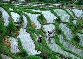 南昌湾里区罗亭镇300亩水田被村干部卖了 村民疑惑