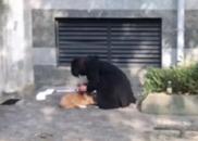 """新华网:人们的容忍纵容了""""蛮横养狗""""人士的跋扈"""