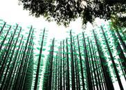 """3万啤酒瓶组成""""啤酒丛林"""" 成西海岸新""""网红"""""""
