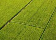 全国政协委员夏涛:完善高标准农田建管机制