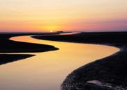 黄河入海口,同一尾鱼慢慢老去