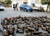 江西破获迄今最大贩卖野生动物案 多名公职人员涉案