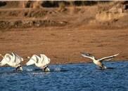 惊鸿戏水冰湖边,可是白衣仙子来?