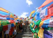 《大家来帮忙》走进西藏 邀您品尝高原之舟牦牛肉