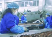 图集|洪湖小龙虾 香味四溢回味无穷