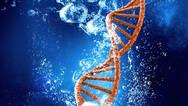 中国科学家绘制出全球首个哺乳动物细胞图谱
