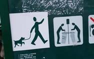 巴黎公园开始取消遛狗禁令,为的是让公园更受欢迎