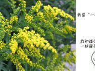 """言植有理 第013期:任性又嚣张!有一枝黄花就叫""""一枝黄花"""""""