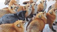 """动物天堂!细数全球被动物""""占领""""的胜地"""
