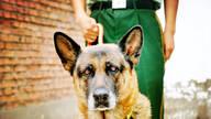 一只军犬的述职报告:我凭什么名震网络!