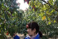 滁州1家4代24口人接力植树造林60年 荒山变林海