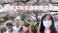 疫情爆发中的美国樱花节热闹不再 戴口罩?不存在的!