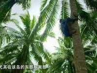 《望海南》第五集海纳百川