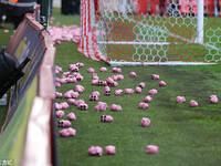 英甲球场现千只粉色小猪 温格心凉不?