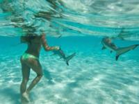 惊!模特海中与鲨鱼共舞