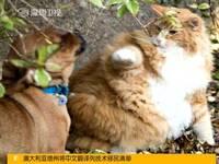 资源猫的激活码