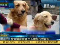 爱犬当街被抢 主人追赶遭拖行导致骨折