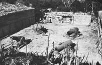 誰說大阪師團是窩囊廢?曾是日軍總預備隊,一戰俘虜7萬美軍