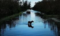 【谈心】飓风中49只狗狗被遗弃,这些明星看不下去了