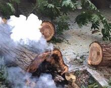 武汉一棵树热到冒烟