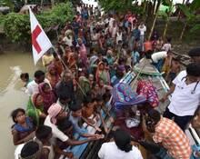 印度洪灾肆虐 老虎浮尸水上